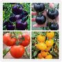 Sementes De Tomates Amarelo Roxo E Vermelho 50 Pcs