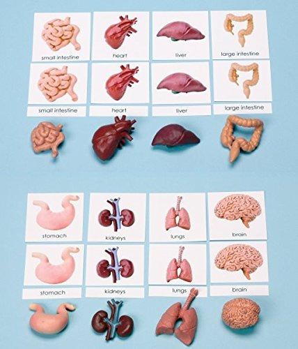 Montessori Órganos / Cuerpo 3-part Cards & Matching Mini ...