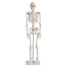 Esqueleto Humano Modelo Anatomico Tamaño 85cm Vv4