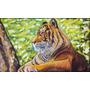 Quadro Tigre 50x30cm Pintura Óleo Sobre Tela