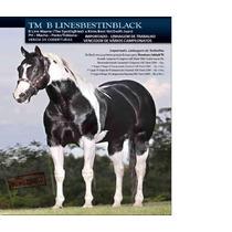 Cobertura Paint Horse