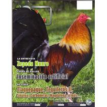 Revistas De Gallos Pie De Cria Usadas