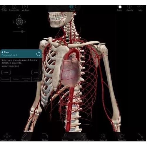 Atlas Anatomia Humana Programa 3d En Español + Pdf Netter - $ 13.900 ...