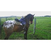 Cavalos Appaloosa