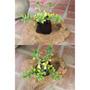 Plantas Florales, Medicinales Y Frutales!