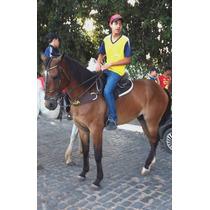 Cavalo De Vaquejada