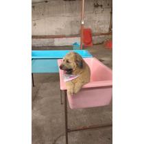 Banheiras Pet Shop Com Suporte