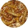 Tenebrios X 100 - Alimento Vivo Para Geckos, Pogonas, Erizos