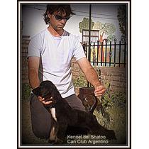 Cachorros Afganos Tienen 30 Dias