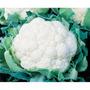 Sementes De Couve Flor Teresopolis Gigante Pcte C/ 100 Gr Ts