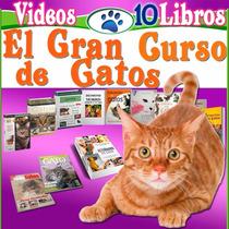 Libro: Aprende Todo Sobre Gatos 10 Libros Mas Videos 2016