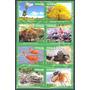 Estampillas Serie 8 Valores Biodiversidad Venezolana 2016