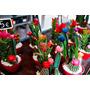 Cactos Mini Cactos Plantas Ornamentais Suculentas Vasinhos