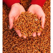 Tenébrio Molitor 200 Larvas