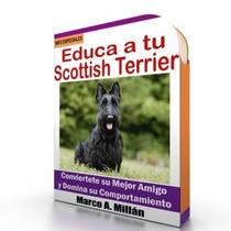 Como Educar A Un Scottish Terrier - Guía De Adiestramiento