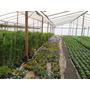 Plantines Florales Del 10. Alegrias Del Hogar,alisum Etc.