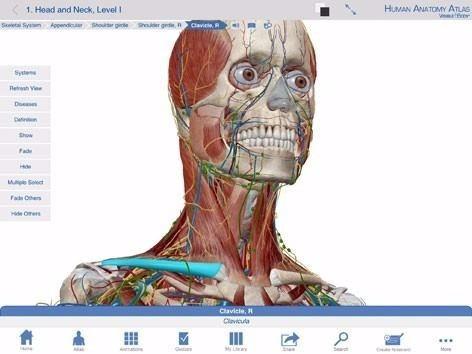 Soft Atlas Anatomía Humana En 3d 7 Ed Español Envío Gratis - $ 195 ...