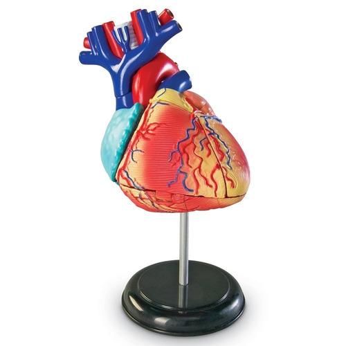 Modelo Corazón Humano Anatomía Figura Juego Didáctico 29 Pzs ...