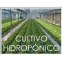 Proyecto Hidroponia, Cultivos Hidroponicos, En Digital.