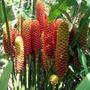Shampoo Ginger (sorvete) - Flores Tropicais