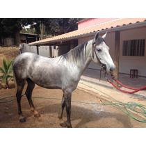 Vendo Ou Troco Cavalo Registrado Em Sete Lagoas 95124884watt