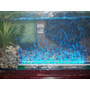 Luces Led Para Acuario En Todos Los Colores<br><strong class='ch-price reputation-tooltip-price'>$ 68.000</strong>