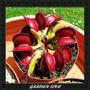 20 Sementes De Planta Carnívira Dionaea + Brinde