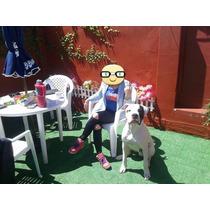 Dogo Argentino Para Servicio