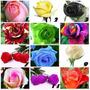 200 Semillas Rosa Exoticas 12 Colores Arcoiris Rojo Azul