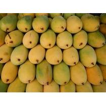Arbolitos De Mango, Contamos Con Diferentes Variedades