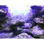 Rocas De Mar Cultivada Para Acuarios Marinos Y Reef