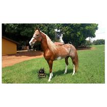 Cavalo Mangalarga Pisador Registrado