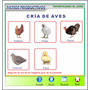 Asesoramiento Cría De Gallinas, Pollo, Pavos, Codorniz Patos