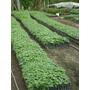 Venta De Plantas Nativas Forestales En Viveros