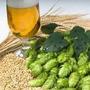 Kit Cerveza Artesanal 20 Litros Malta Levadura Lupulo