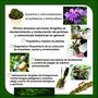 Servicios Y Asesorías En Jardinería Y Horticultura