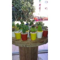 Souvenirs Cactus Y Crasas. El Mejor Precio. En San Martin!