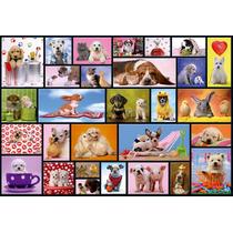 Animales Perros En Tela Canvas Bastidor De 50x35 Cm