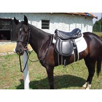 Égua Marchadora E Cavalo Castrado Para Crianças Em Ibiúna!!!