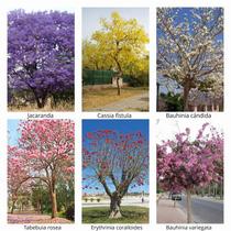 Semillas De Árboles Florales, 6 Especies.