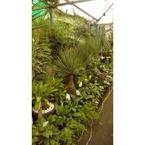 Plantas Y Bonsai Arte Decoracion De Interiores Y Exteriores