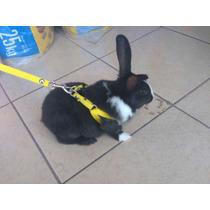 Pechera Para Conejo