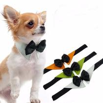 Gravata Borboleta Com Colarinho Pet Cão Cachorro