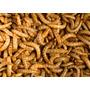 Tenebrios Barratisimos Para Tu Mascota Insectivora Erizos