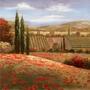 Poster (51 X 51 Cm) Tuscan Cypress I Nan