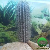 Planta Cactus Artificial 22cm Para Terrário De Répteis