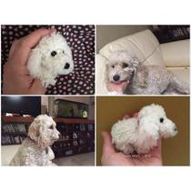 Perros Personalizados Poodle Crochet