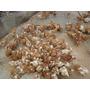 Pollas Ponedoras Blancas O Coloradas De 60 Dias