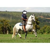 Cavalo Garanhão Reprodutor Lendário Do Lumiar
