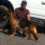 Cachorros Pastor Aleman Con Pedigree